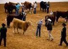 Livestock Show 1/14-17